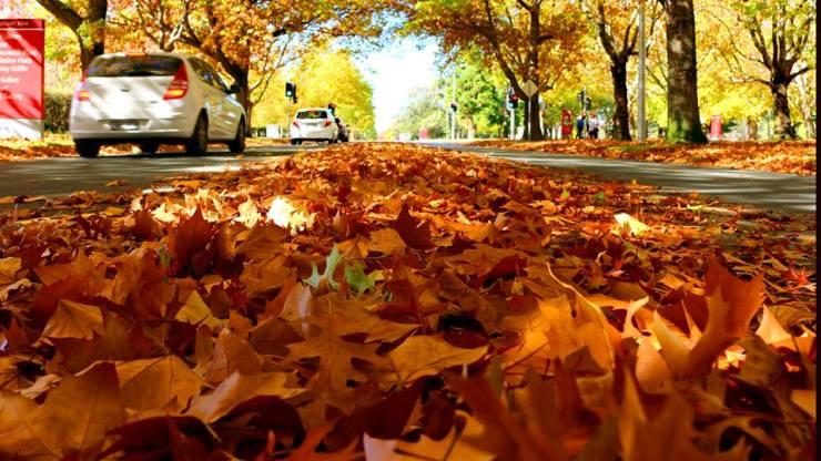 autumn may 1