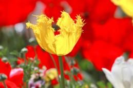 yellow-bulb-x-5