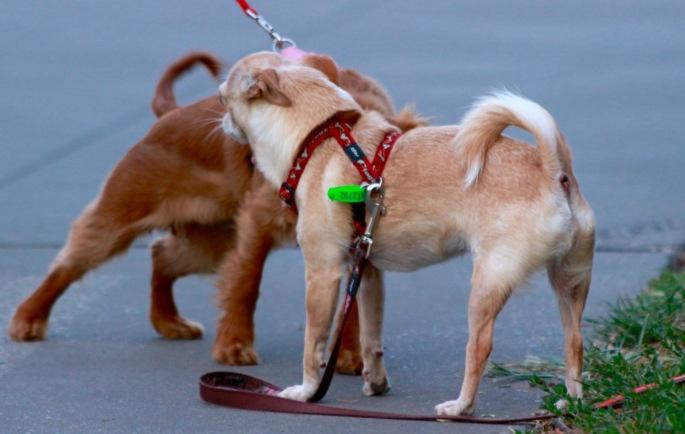 butt smelling puppies.jpg